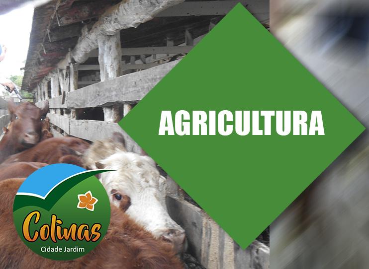 Agricultura realiza cadastro de animais e entrega...
