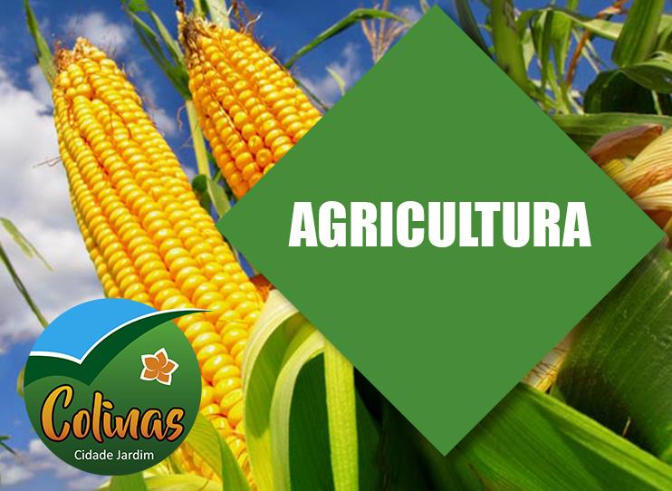 Agricultura abre prazo para pedidos para a Safrinha...
